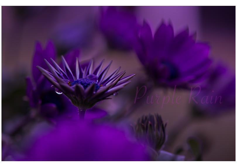 Purple Rain.....