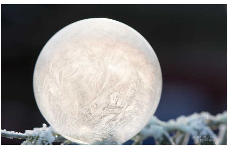 The sun caught in frozen bubble
