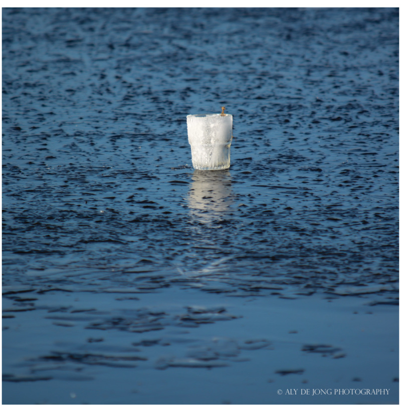 Cup ice on the frozen  lake