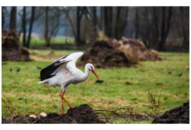 stork back again