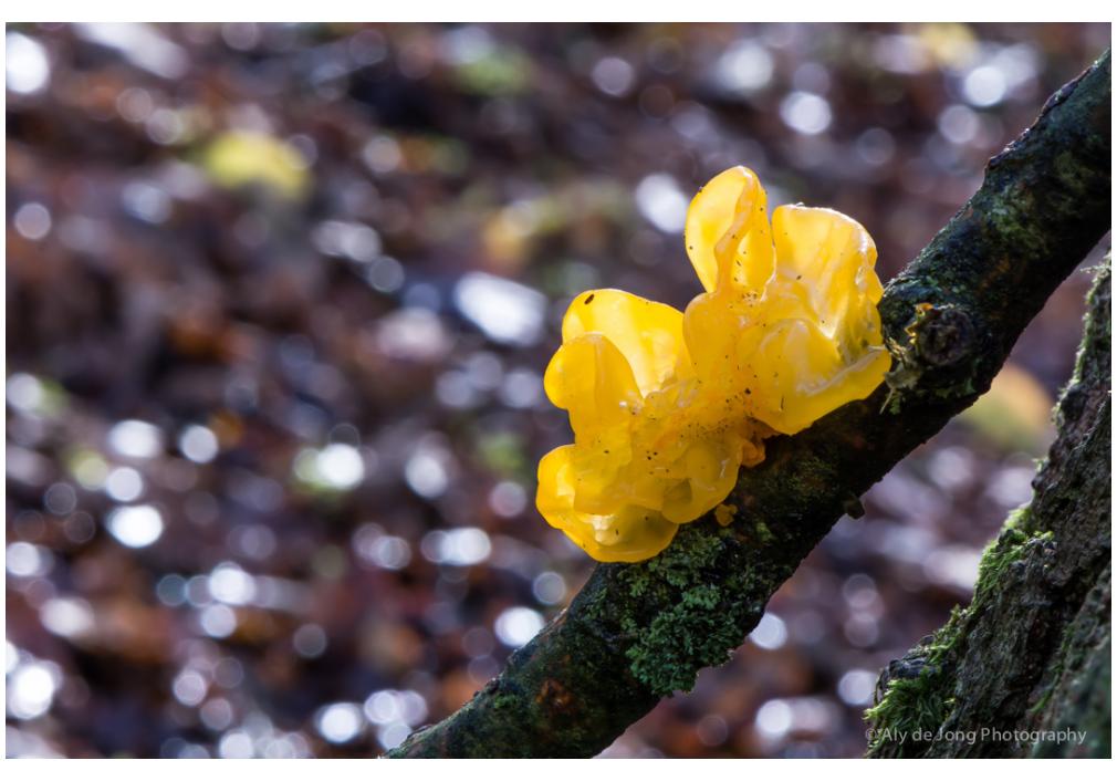 yellow vibrating mushroom