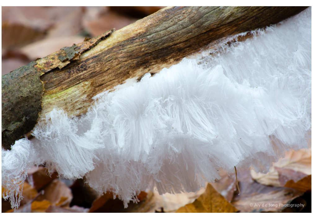 Nature wonder ice-hair 2