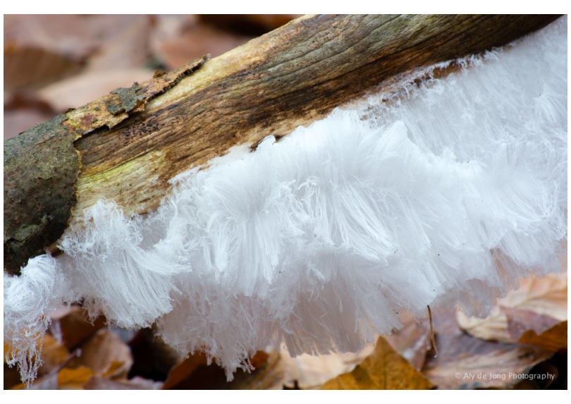 Nature wonder ice-hair 2