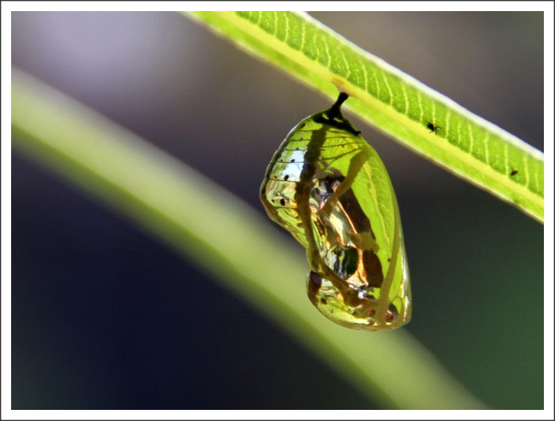 ...The Cocoon...