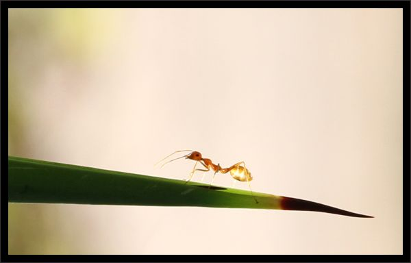 ...in born needles ......an ant & a thorn...