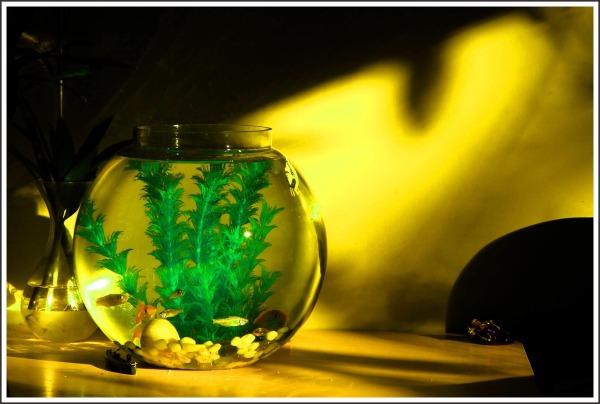 ...small fish tank...