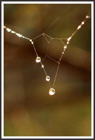 ...natures magical  gift...