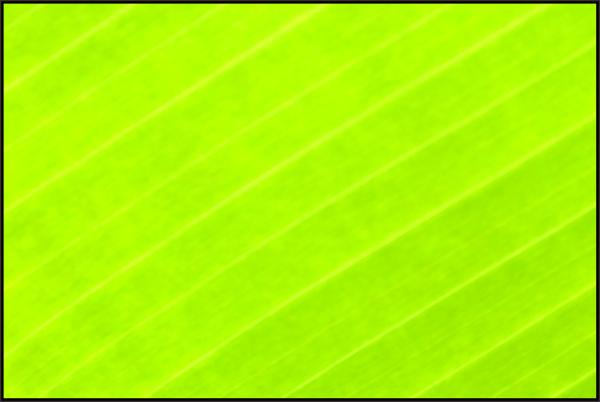 ...Go Green...