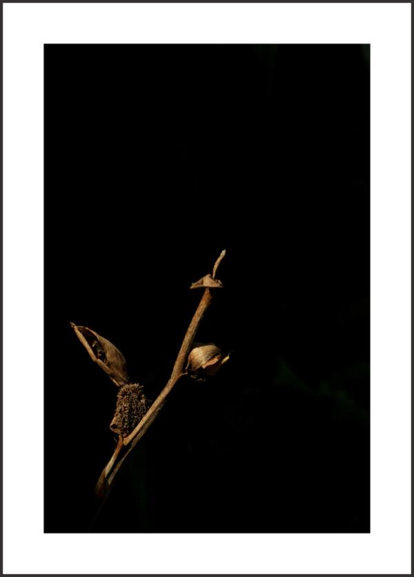...Golden light...