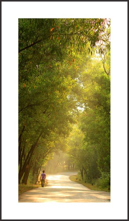 ...morning walk...