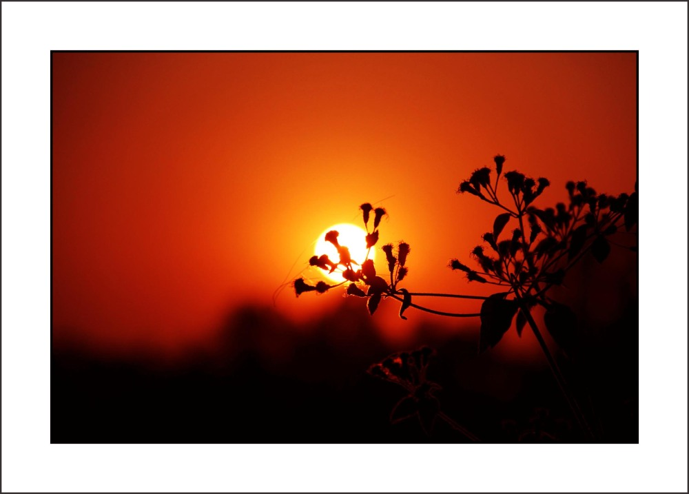 ...tiny branches holding '' THE SUN ''...