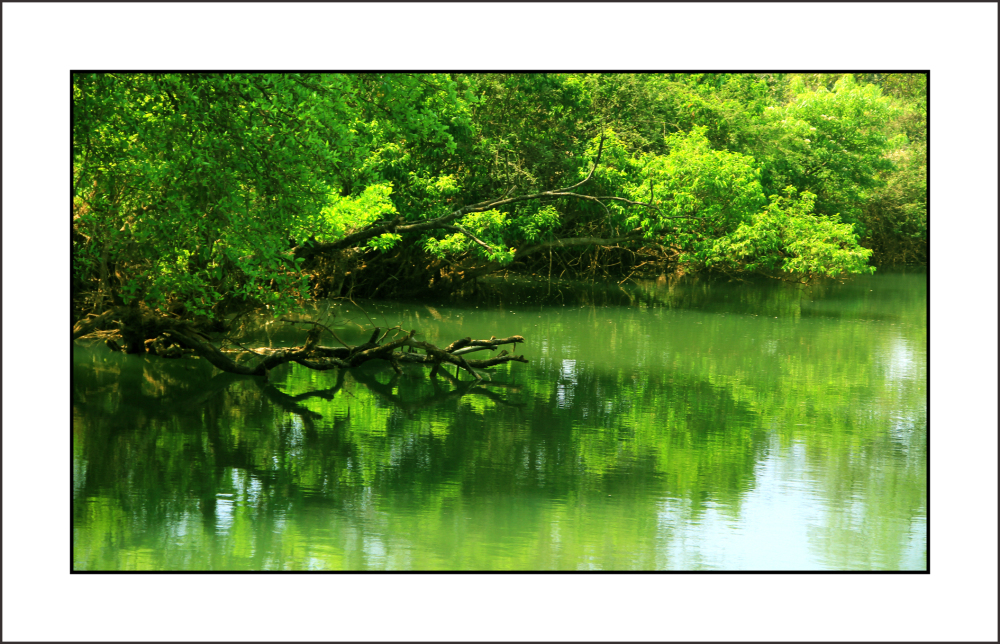 ...suspended green...