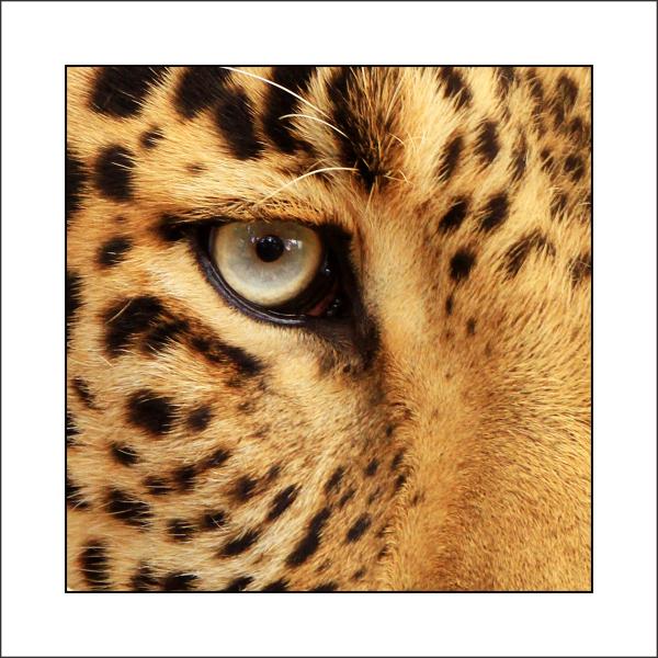 ... a '' TIGER '' look ...