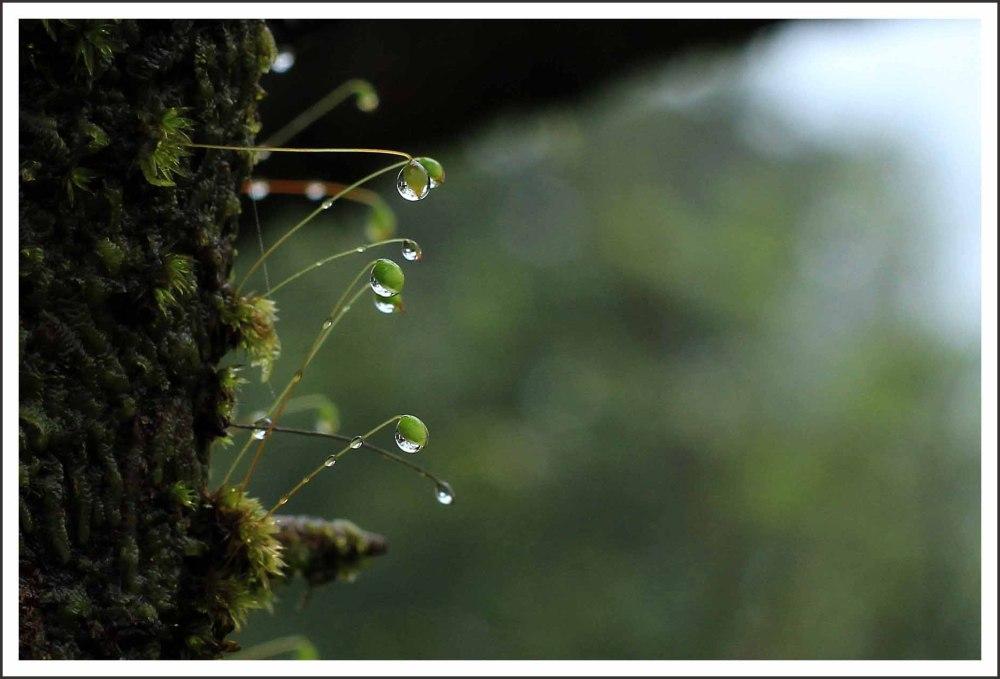 ... awaited monsoon ...