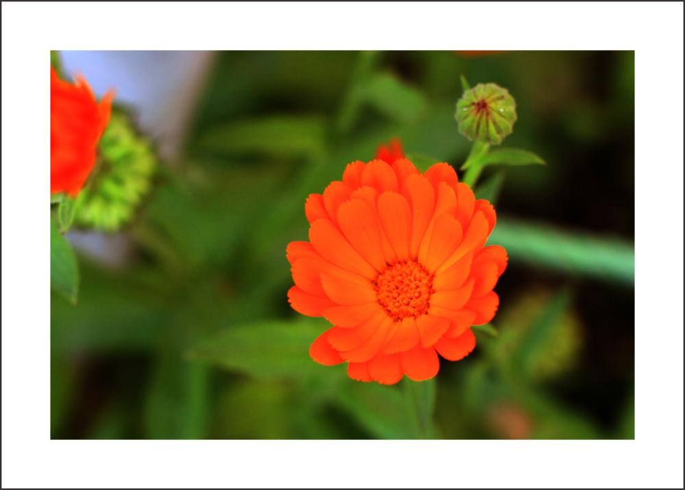 ... orange ...