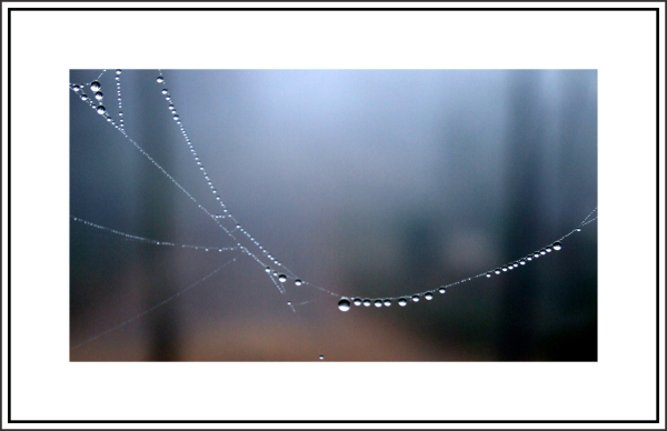... and '' dew '' continues ...