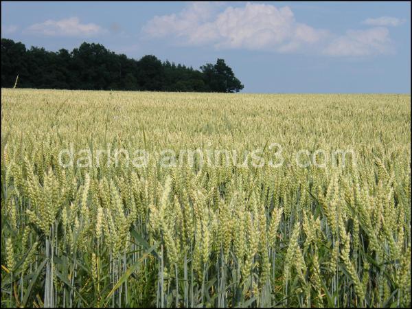 crops prague