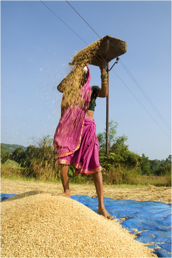 Annadatri...( The godess who gives us food)