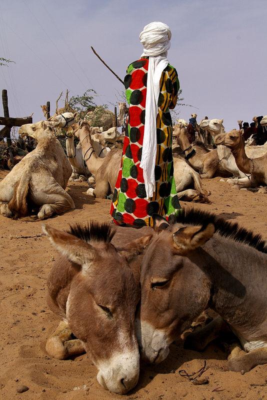from Ayorou / Niger