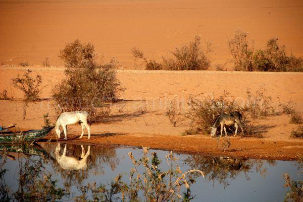 on the shore of Lake Nasser in Egypt-Sudan border
