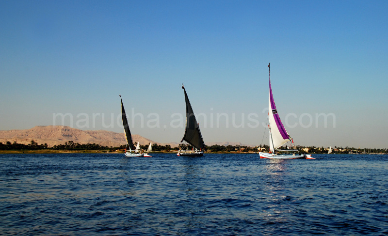 Felukas on Nile