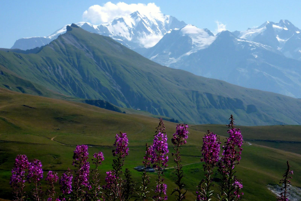Le printemps des montagnes