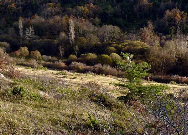 Le bush charentais