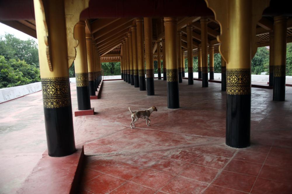 Le chien du palais royal