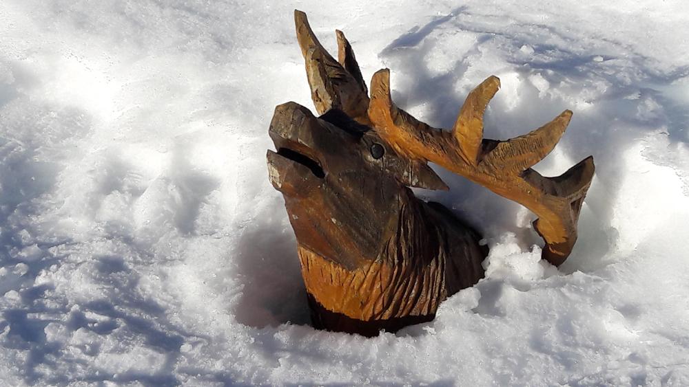 Sortir la tête de la neige