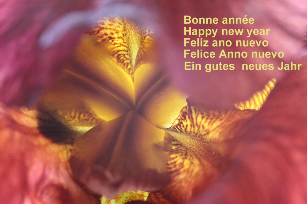 Bonne et joyeuse année à tous
