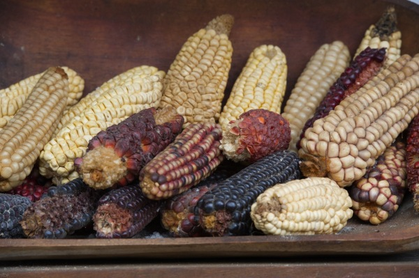 Corn II