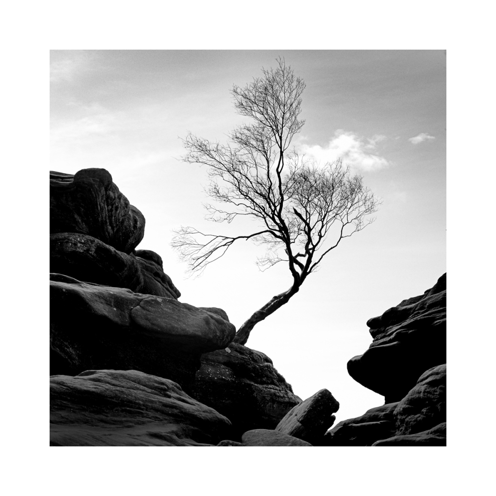 A single tree growing out of the rocks