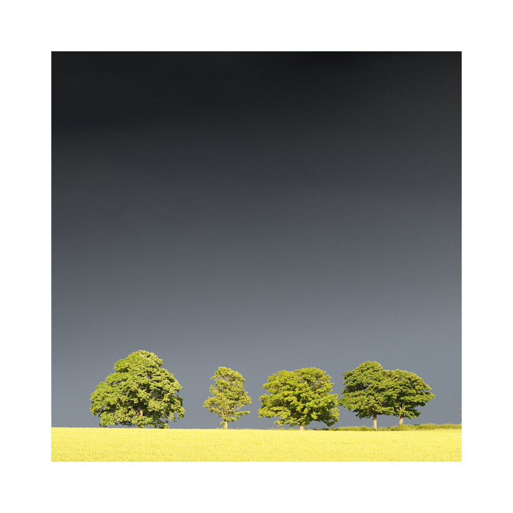 Trees set against dark sky in yorkshire