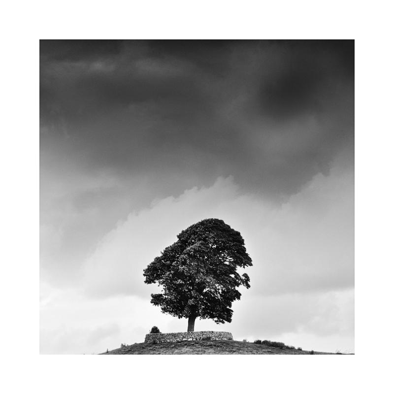 A single tree near Layburn Yorkshire