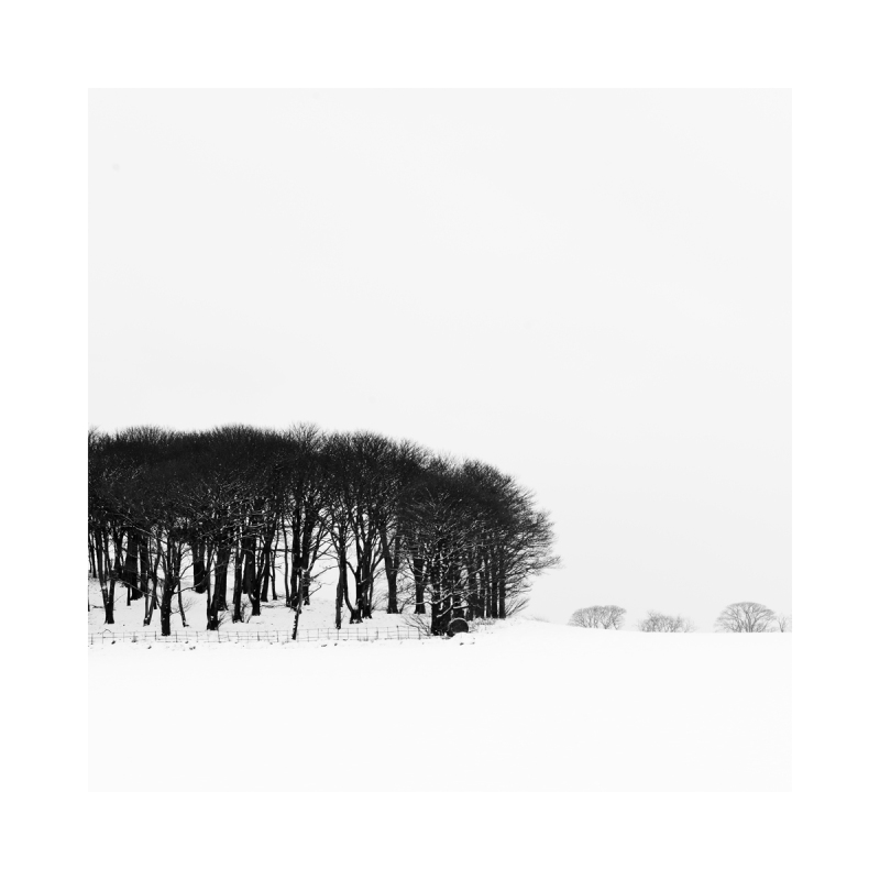 black & White Fine Art image - Snow and Tree's