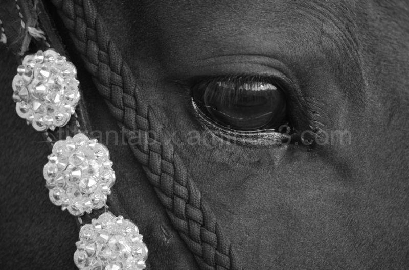 Jeweled Horse