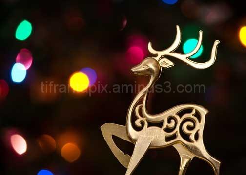 More Reindeer Bokeh