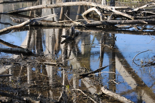 Pond; Bridge