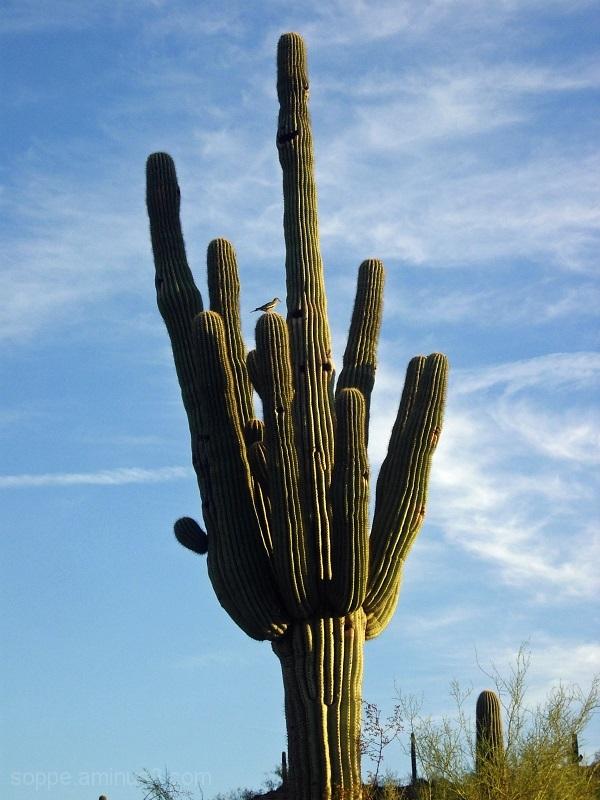 rgs Classic Photo: Saguaro (2009)