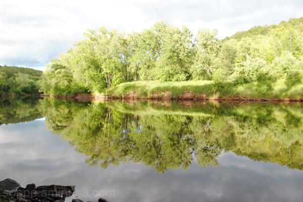 tee-hee (Reflections)