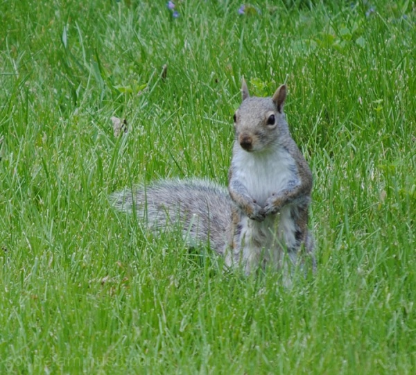 Totally innocent squirrel pose