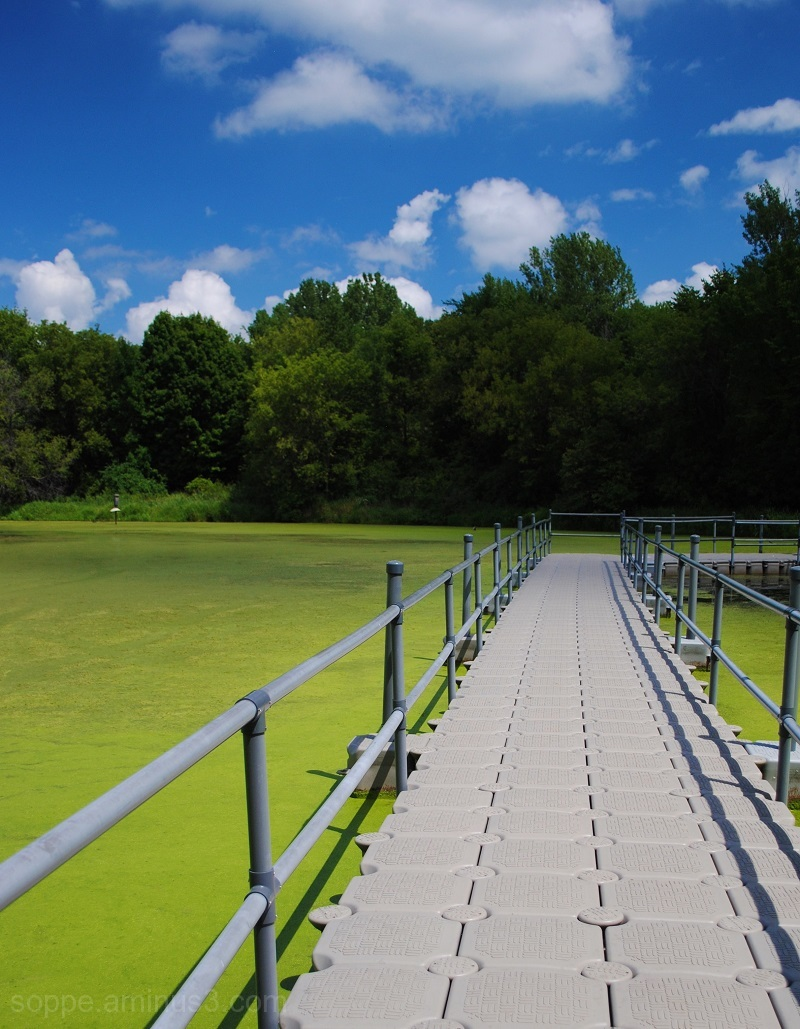 green water boardwalk