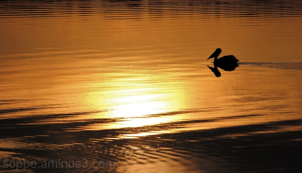 heading into the sunset  (NoDak#3)