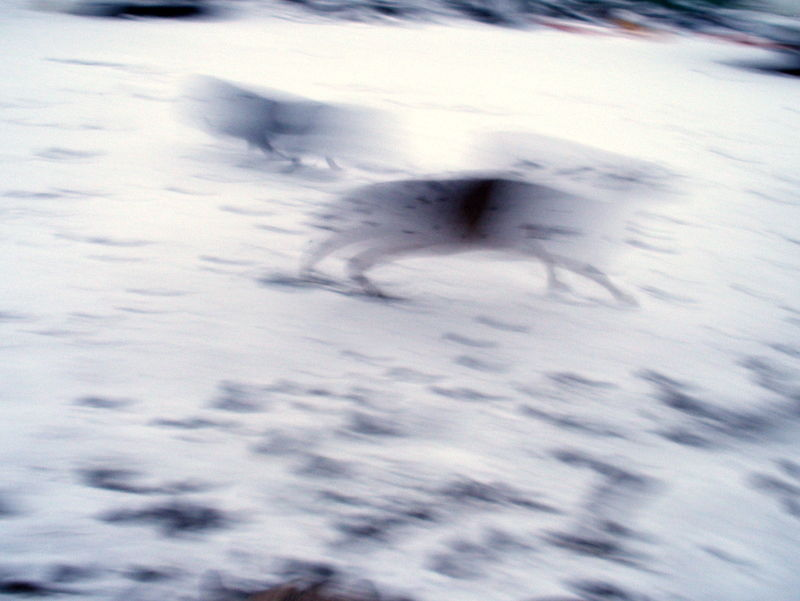 blur animals