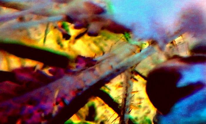 blur color flora