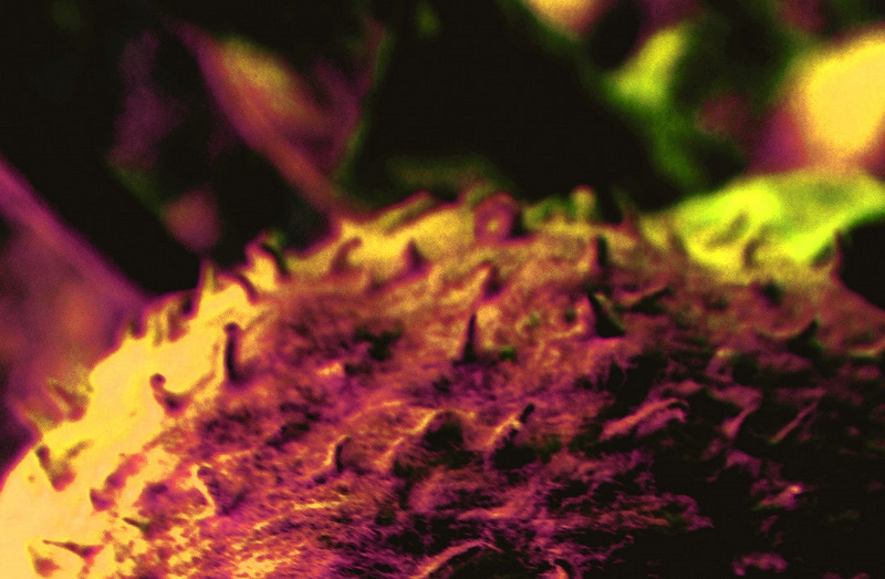 blur color pod