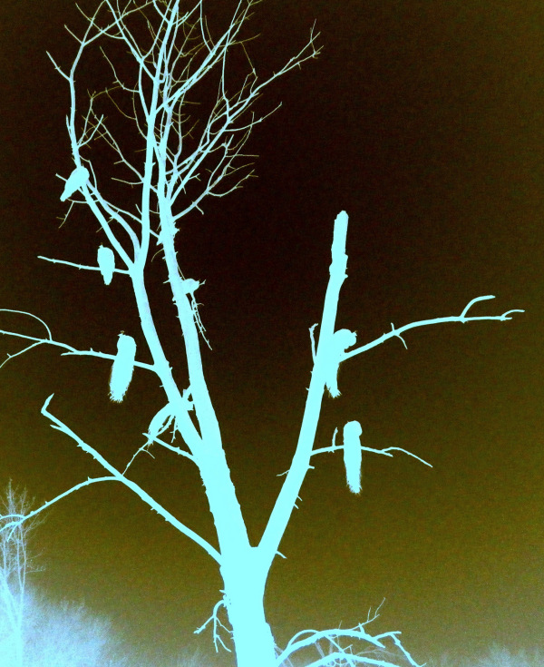 negative birds