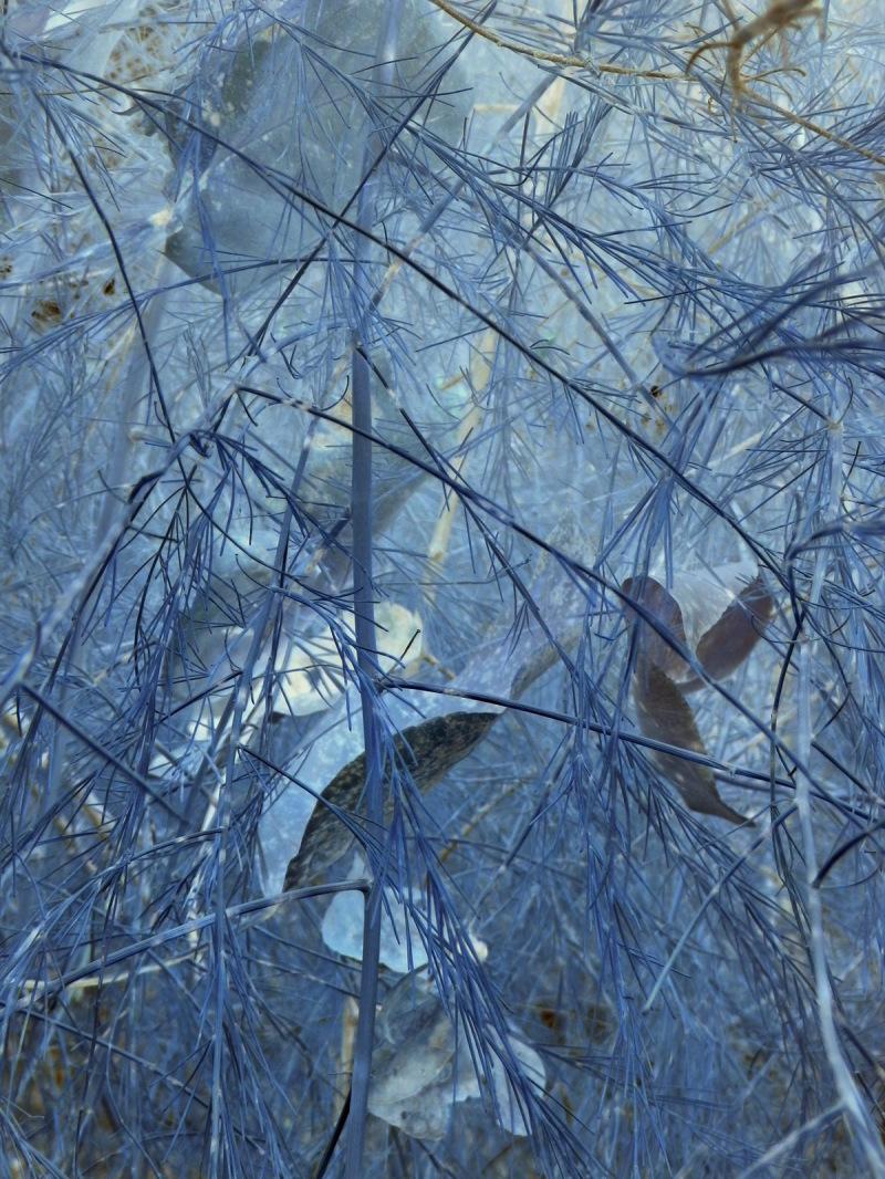 pale blue flora