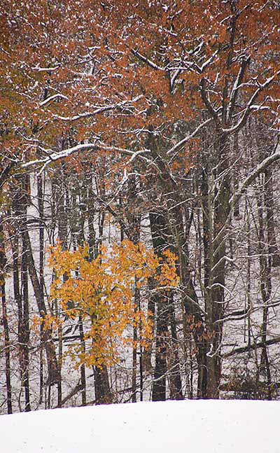 Snow on Fall Colors