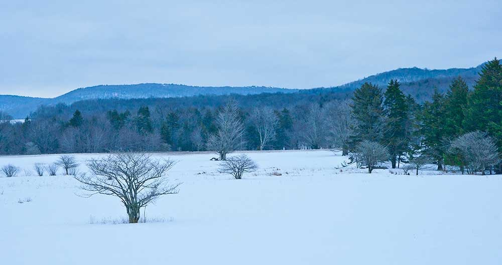 Morning, Canaan Valley